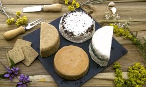 dairy-alternative cheese