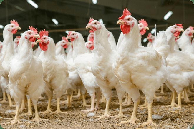 Animal Welfare Regulations eliminated under Trump Administration