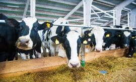 Dairy UK Discredit Claims That Dairy is Not Sustainable