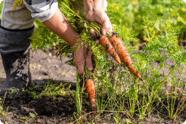 Growth of Plant Based Food Paving the Way for Horticultural Opportunities