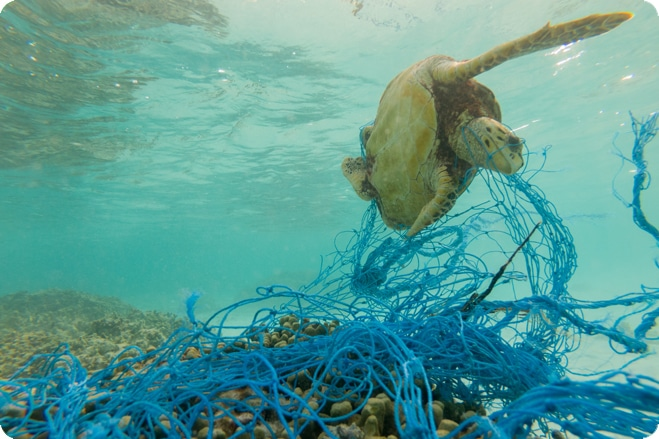 Tesco and Nestlé join forces to tackle fishing net pollution