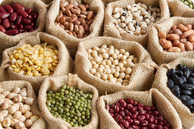 Study Shows Plant-Based Crops Produce More Protein Than Animal Meat