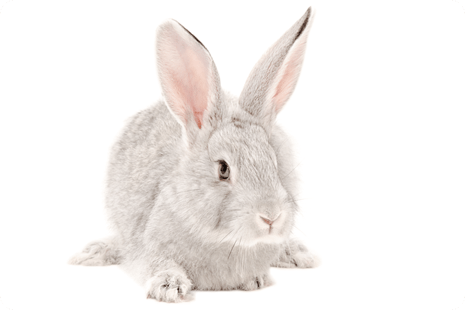 China moves closer to animal-testing ban on post-market cosmetics